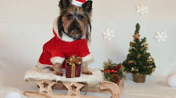 Top Pet Safety Tips for the Holidays