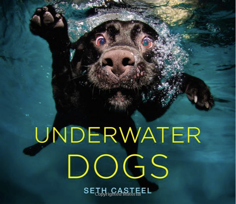 underwater dogs photos