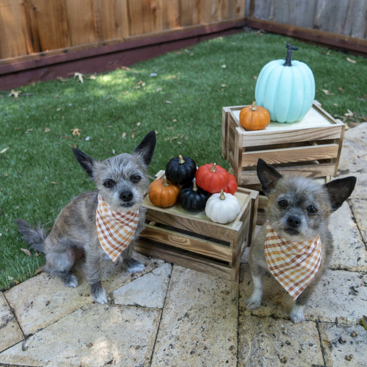 Thanksgiving Plaid Dog Bandana - The Woof Warehouse