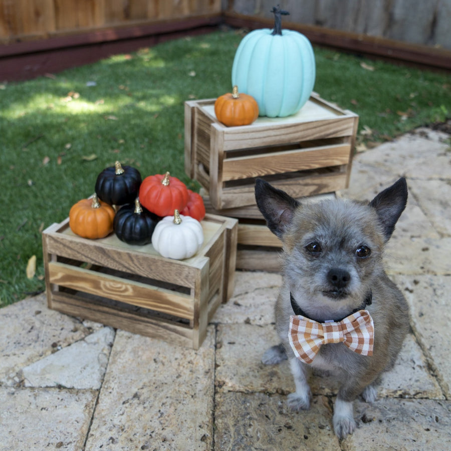 Thanksgiving Plaid Bow Tie - The Woof Warehouse