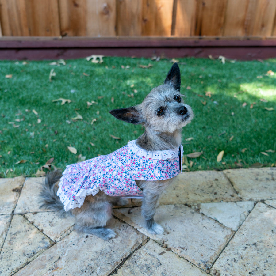 Dog Dresses - The Woof Warehouse