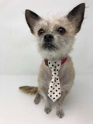 Dog Necktie - The Woof Warehouse
