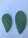 "Spineless Prickly Pear Cactus Pads ""Opuntia ellisiana"""