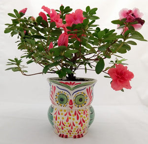 "Owl Flower Pot 5.5"" Height MultiColors"