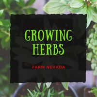 Grow Herbs indoors for Beginners