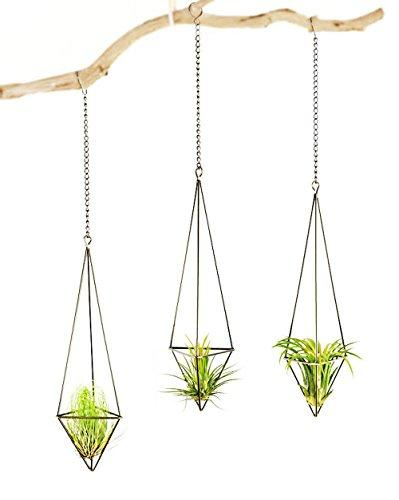 3 Pack Hanging Air Plant Holder Himmeli for Tillandsia Airplants Display (with Chains), Bronze - Farm Nevada - Gardeners Start Here