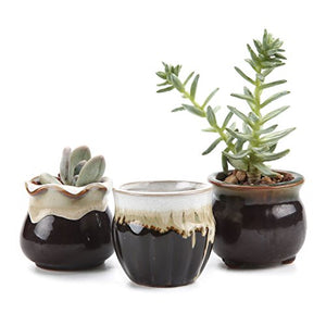 Black&White Base Serial Set Succulent Plant Pot - Farm Nevada - Gardeners Start Here