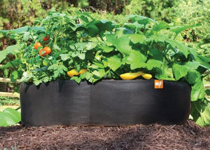 Victory 8 Fabric Raised Garden Bed, 2x2 Feet - Farm Nevada - Gardeners Start Here