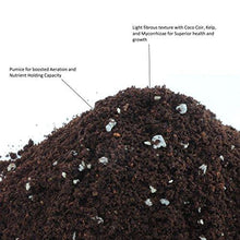 Cactus Succulent Plant Soil Mix - Home Garden Potting Soil for Growing Cacti - Water Saving with Coco Coir - Proper Aeration & Balanced Nutrition Expands to 8 Quarts - Farm Nevada - Gardeners Start Here