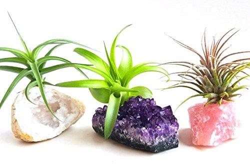 3 Pcs Tillandsia Air Plant Crystals Kit / Lot Includes Amethyst Cluster, Rose Quartz, and Crystal Geode / Terrarium Fairy Garden Stones + Kraft Gift Box - Farm Nevada - Gardeners Start Here