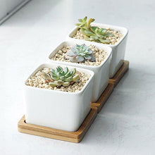Greenaholics Succulent Plant Pots - 2.76 Inch Ceramic Small Square Planters, Cactus Plant Pots, Flower Pots with Drainage Hole, Bamboo Tray, Set of 3, White - Farm Nevada - Gardeners Start Here