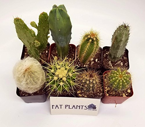 Fat Plants San Diego Pack of Assorted Cacti Plants in 2 inch Pots (8) - Farm Nevada - Gardeners Start Here