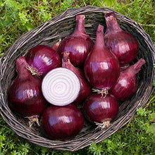 Red Onion Seeds - Farm Nevada - Gardeners Start Here