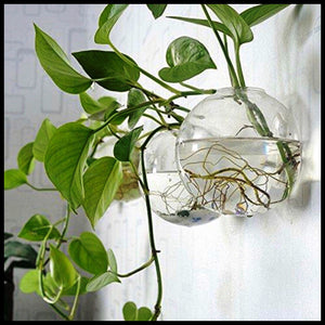6 Round Glass Wall Hanging Planters - Farm Nevada - Gardeners Start Here