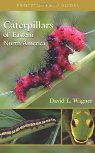 Caterpillars Of Eastern North America: A Guide To Identification And Natural History (Princeton Field Guides)