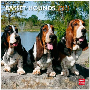 Basset Hounds 2013 Square 12X12 Wall Calendar (Multilingual Edition)