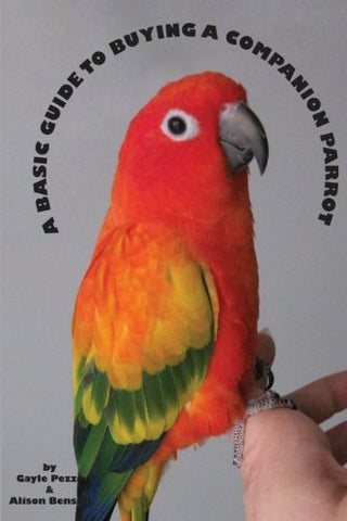 A Basic Guide To Buying A Companion Parrot