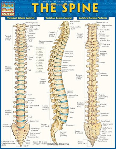 The Spine (Quick Study Academic)