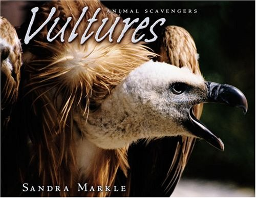 Vultures (Animal Scavengers)