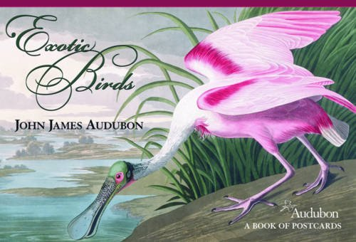 John James Audubon Exotic Birds Book of Postcards Aa580