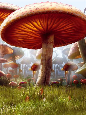 Kate Children Mushrooms Forest Photography Backdrops Fairy Tale - Kate backdrops UK
