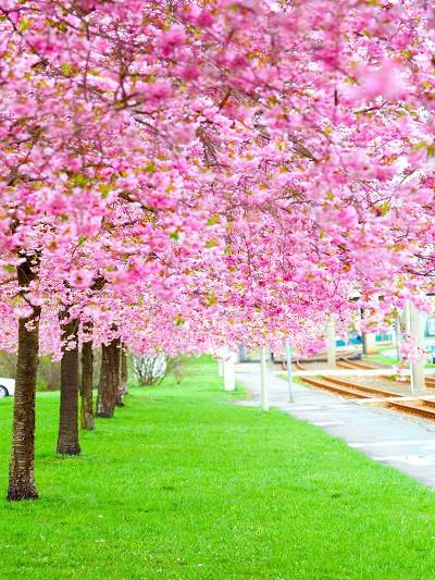 Katebackdrop:Kate Spring Scenery Pink Flowers Green Grass Backdrops