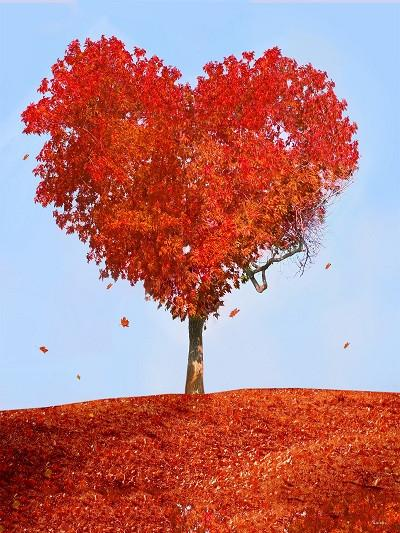 Kate Autumn Red Heart Tree Leaves Photography Backdrop - Kate backdrops UK
