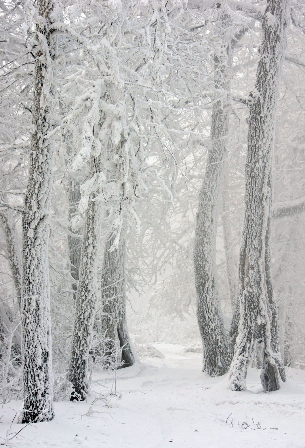 Kate Snow Winter Snowflake Forest Backdrop for Photography