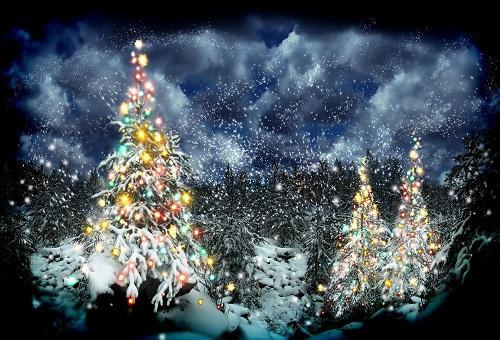 Kate Frozen Snow Trees Winter Scenery Christmas Theme Backdrops