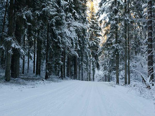 Kate Real Outdoor Winter Forest Snow Road Backdrop - Kate backdrops UK