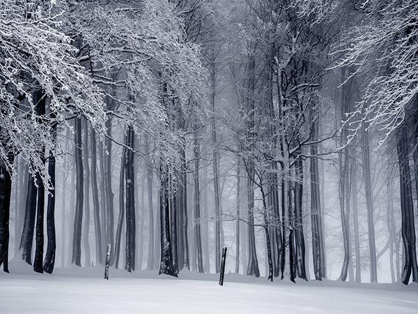 Load image into Gallery viewer, Kate Winter Forest Snow Photo Backdrop Photography Props - Kate backdrops UK