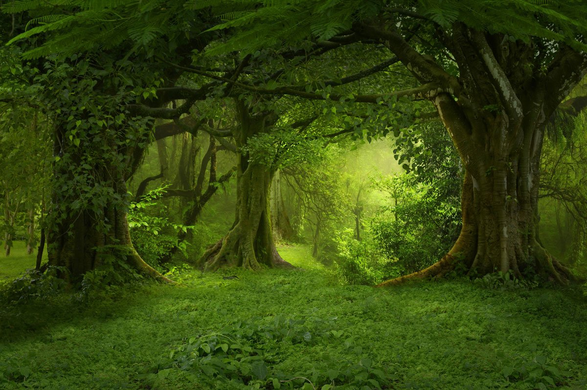 Load image into Gallery viewer, Kate Fantasy Deep forest Sunshine Backdrops for Photography - Kate backdrops UK