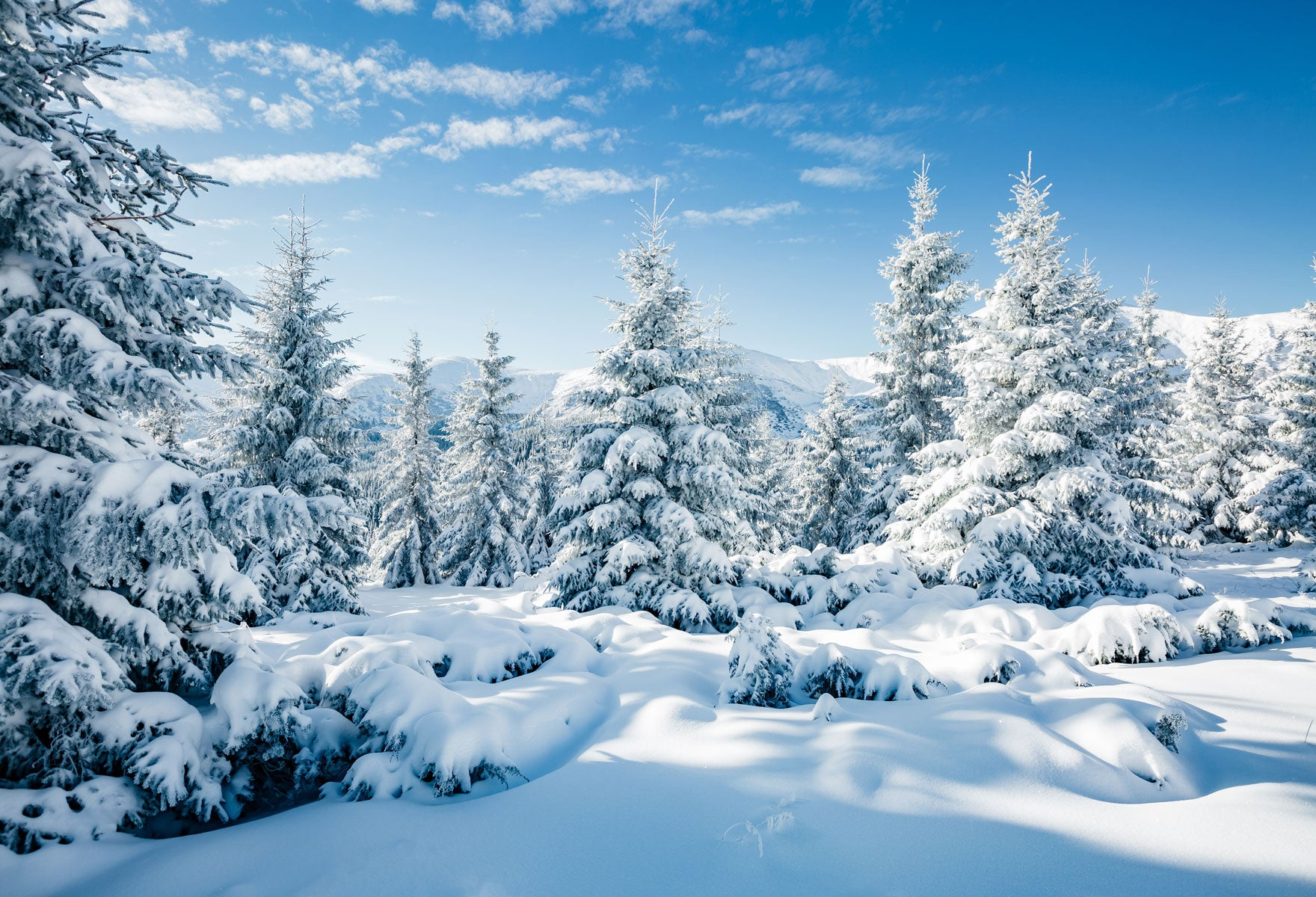 Load image into Gallery viewer, Kate Winter Frozen Forest Backdrops For Photography
