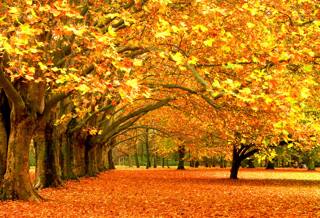 Kate Autumn Fallen Leaves Backdrops For Photography - Kate backdrops UK