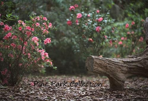 Kate Garden with log bench spring Backdrop for Photography Designed by Pine Park Collection