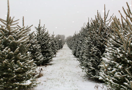 Load image into Gallery viewer, Christmas Pines Tree Farm Path Backdrop