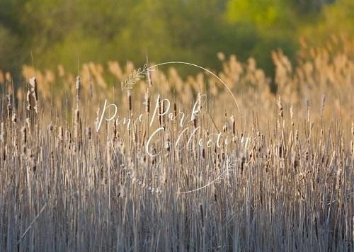 Load image into Gallery viewer, Fall Reeds Scenery Backdrop