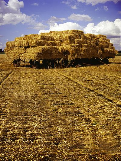 Kate Autumn Harvest Pasture View Backdrop for Photography - Kate backdrops UK