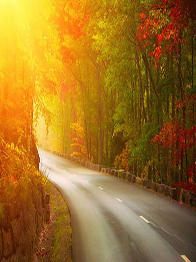 Kate Autumn Scenery Road Trees Sunset Photography Backdrops - Kate backdrops UK