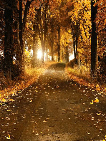 Kate Autumn Secnic Photography Background Fallen Leaves Roads Backdrop - Kate backdrops UK