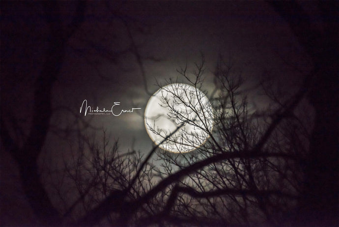 Moon in the Midnight Scenery Backdrop