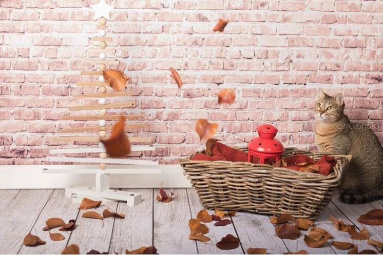 Kate Khaki brick backdrop photography with wood floor - Kate backdrops UK