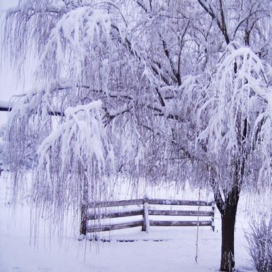 Katebackdrop:Kate Fleeze tree snow backdrop for holiday photography