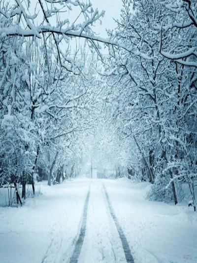 Katebackdrop£ºKate Winter Scenery Snow Road Forest Photography Backdrop
