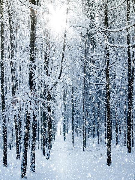 Kate Birch Tree Snow Winter Snowflake Forest Backdrop for Photography - Kate backdrops UK