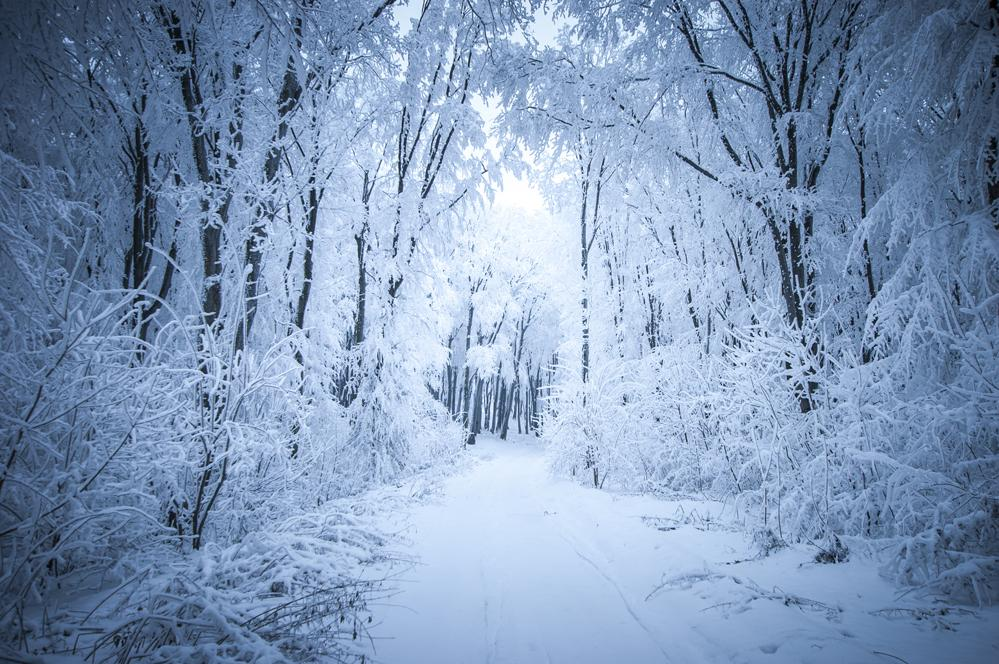 Kate Frozen Forest Backdrop Snow Road Winter Background for Photography