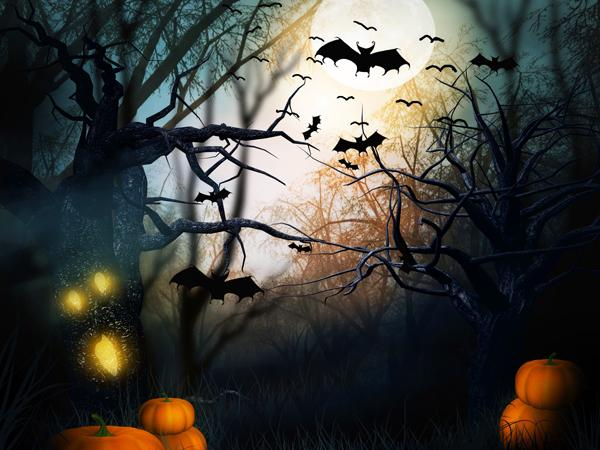 Katebackdrop£ºKate Pumpkin bats Halloween Backdrop Photography