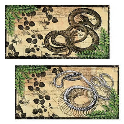Vintage Match Box Snake & Snake Skeleton