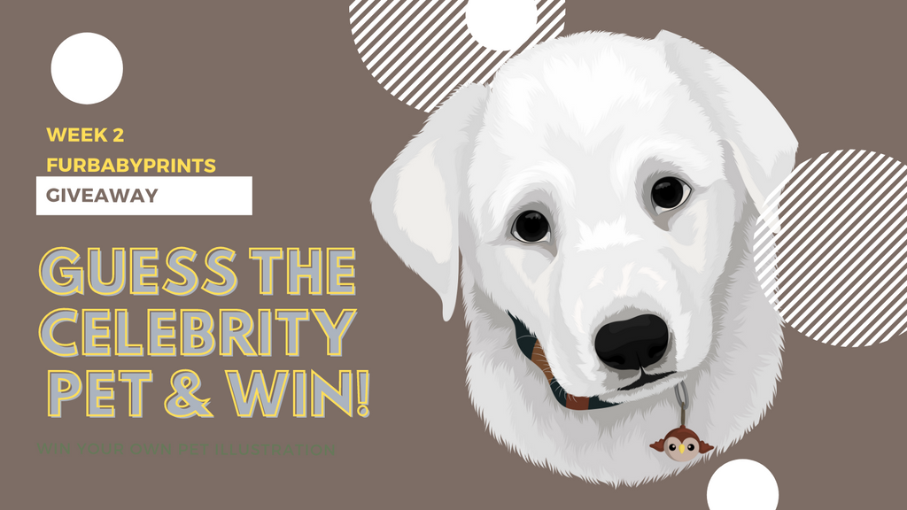 Competition: Guess the Celebrity Pet - Week 2, 2021