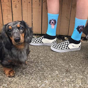 pet on socks